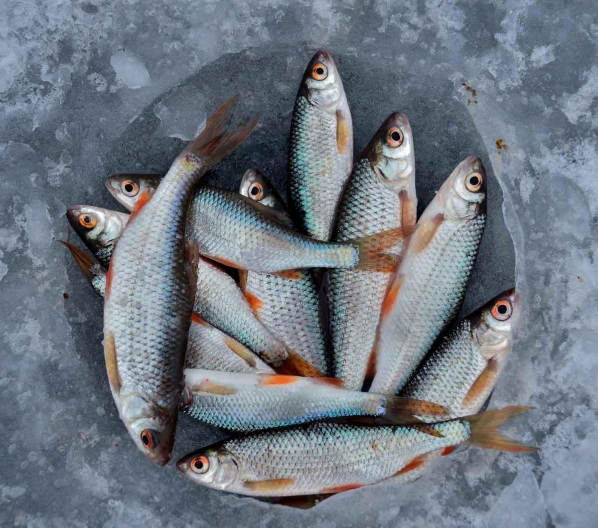 Fisheries - Aquaculture/ Aquatech