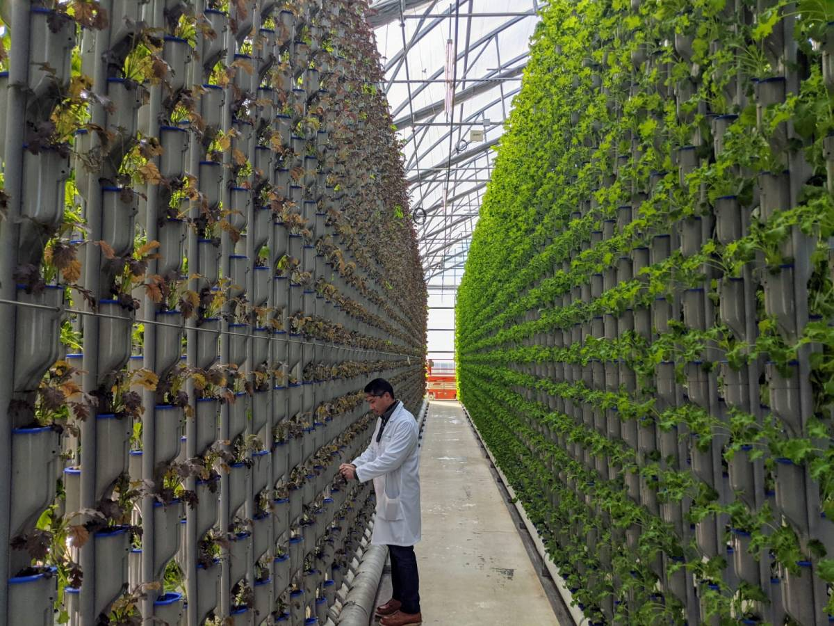 Indoor Agriculture - Greenhouse/ Protected Cultivation