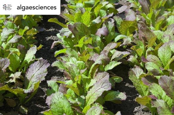 algaesciences - AgTech and FoodTech